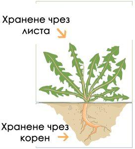 Хранене на растенията чрез корени и листа