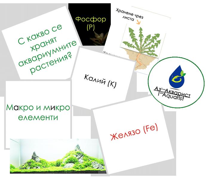 Хранителни вещества в растителния аквариум