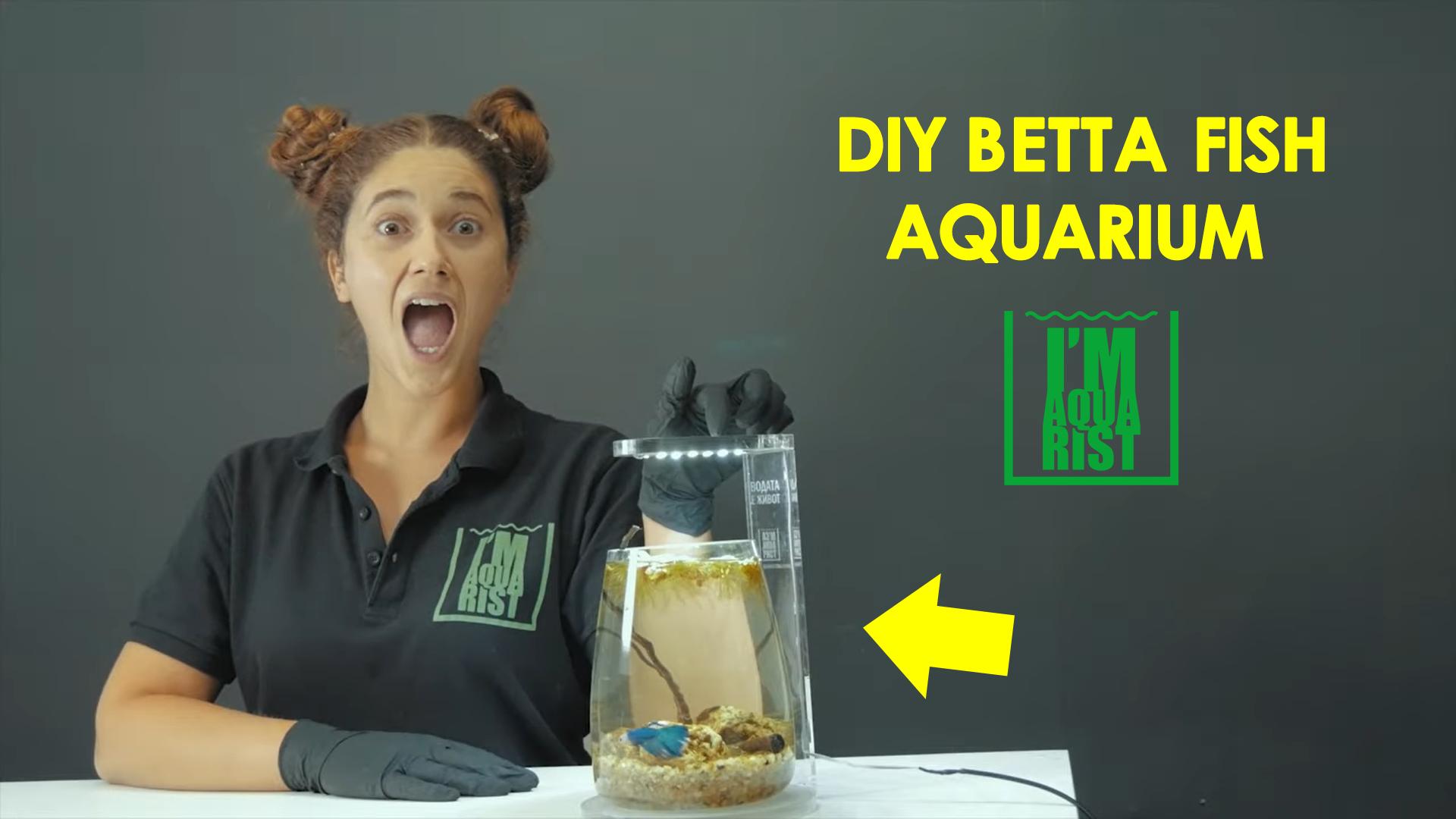 как да създадем аквариум за рибка бета